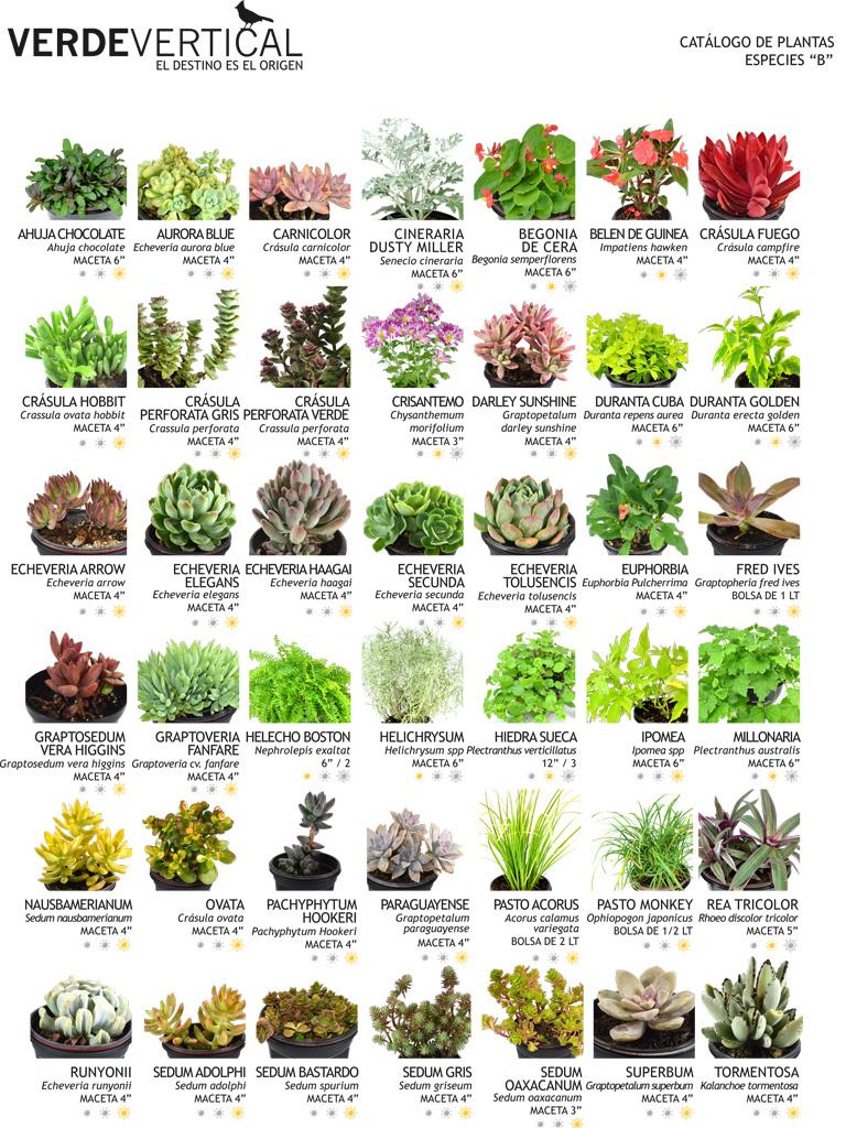 Paleta vegetal vertical gardens for Tipos de viveros pdf